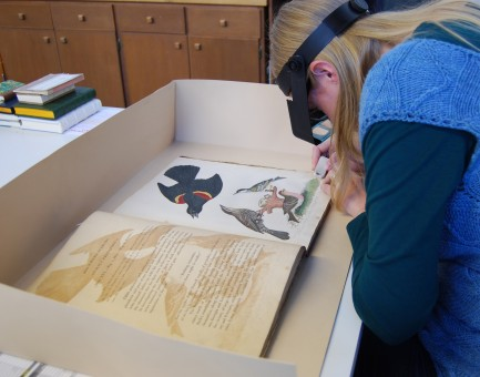 Conservator surface cleaning American Ornithology