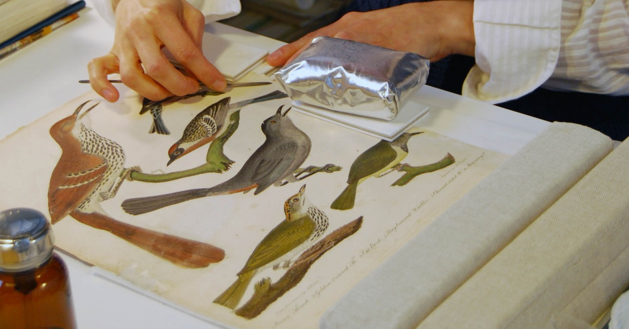 Conservator applies a mend to a page from American Ornithology