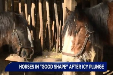 WNEP story on horse rescue