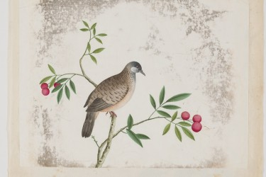 One of a number of c. 1650-1750 Chinese watercolors that we have treated for the Academy of Natural Sciences at Drexel University