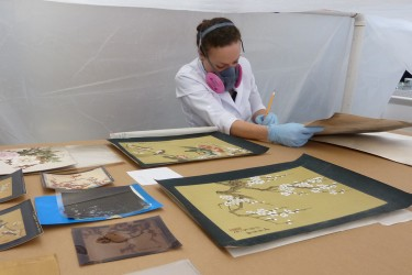 CCAHA Senior Conservation Assistant Jilliann Wilcox in 2017 treating a collection of fire-damaged paintings by I-Hsiung Ju